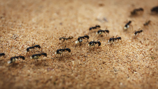 Ant Control and Removal