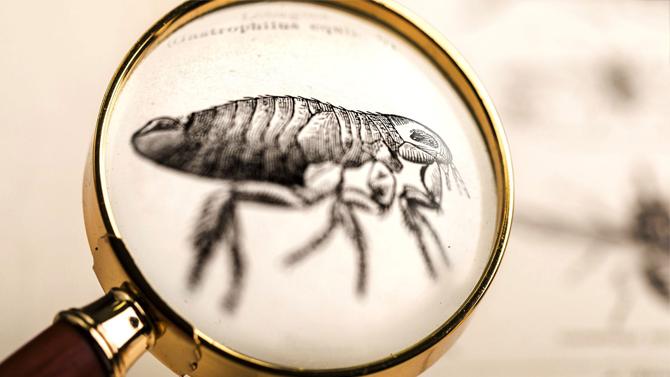 Flea control and treatment
