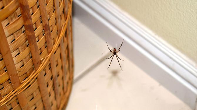 best spider control services