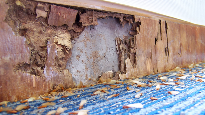 Termite Inspection Checking