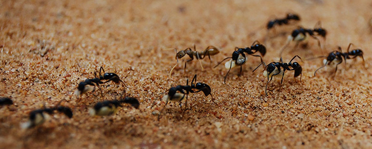 Ant Control Company