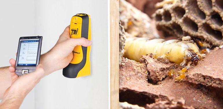 Termite Detection Brisbane