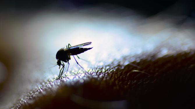 proper mosquito control