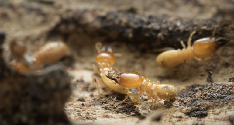 4 Reasons Why Rain Won't Affect Your Pest Control Treatment – And May Even Improve It