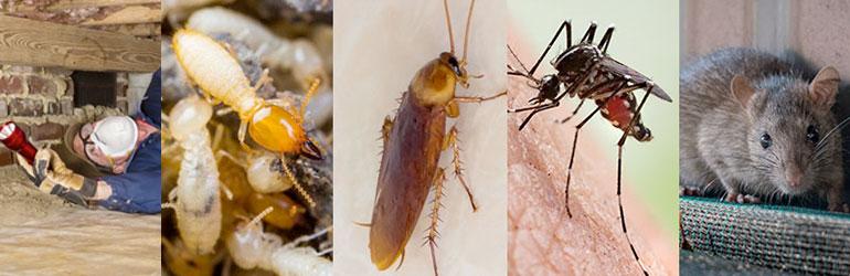 Pest Control Stafford