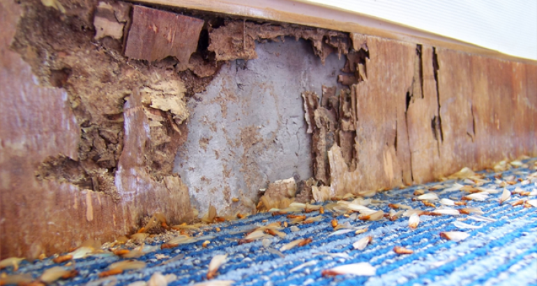 4 Ways You Might Be Unknowingly Attracting Termites to Your House