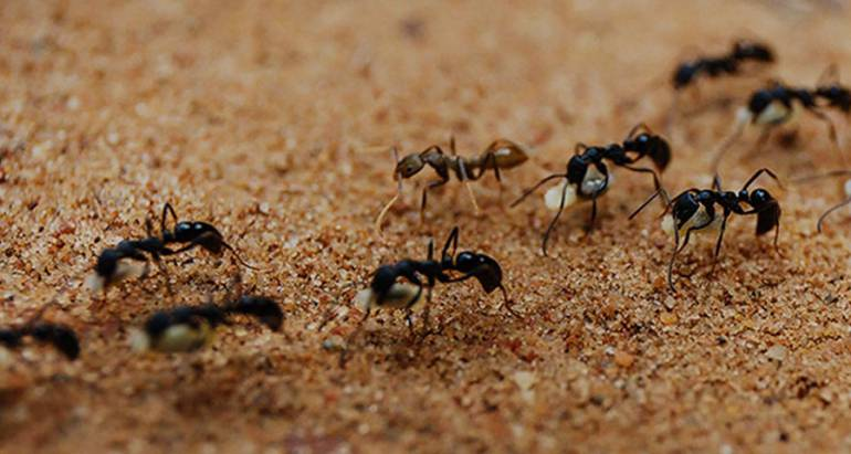 4 Most Common Ant Species to Watch Out For