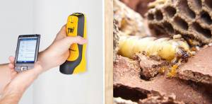 Termite Detection Brisbane
