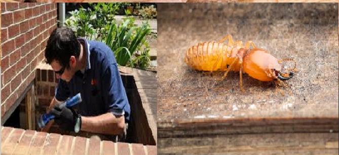 Professional Termite Treatment