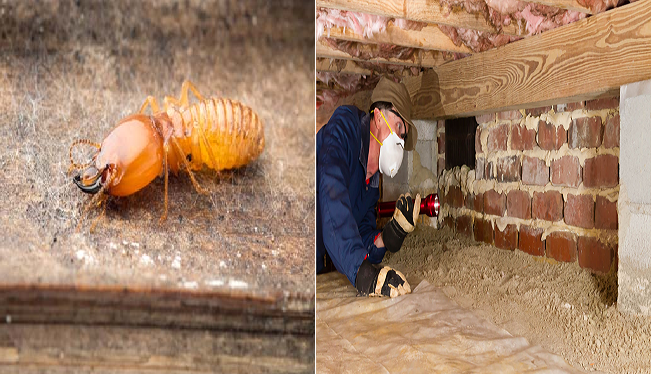 Annual Termite Inspection Services Coomera