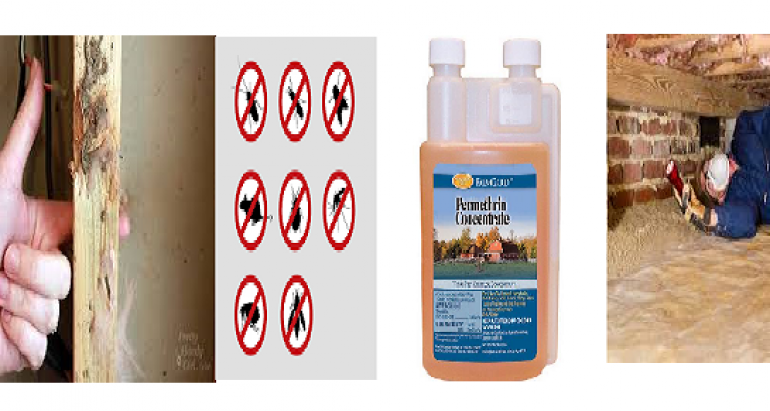 How a Chemical Barrier Can Protect Your Home or Business From Termite Attacks