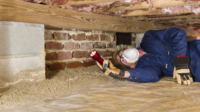 DIY Termite Treatment VS Professional Termite Control – Which is the Best Choice?