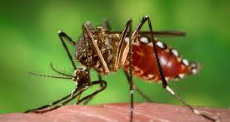 The Most Common Mosquito Diseases You Should Be Aware Of