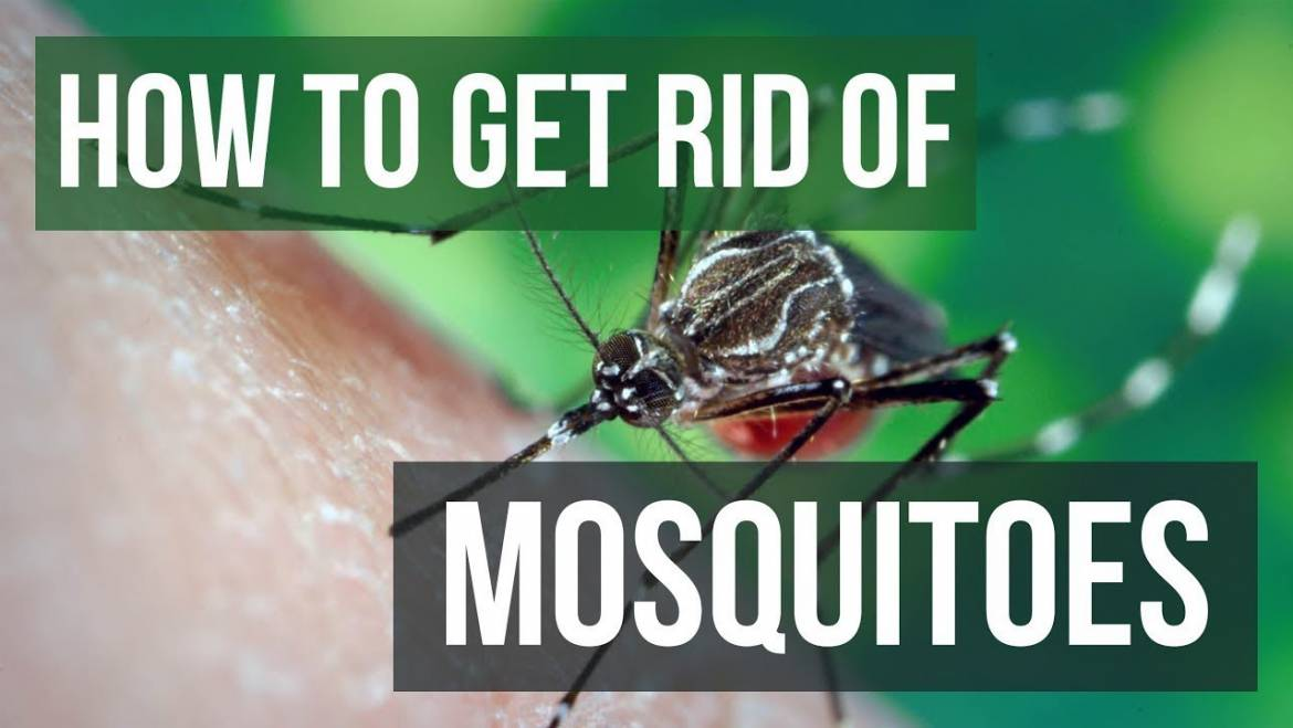 How to Get Rid of Mosquitoes the Right Way