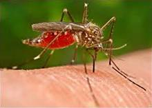 Here are the Best Mosquito Treatments For Your Yard