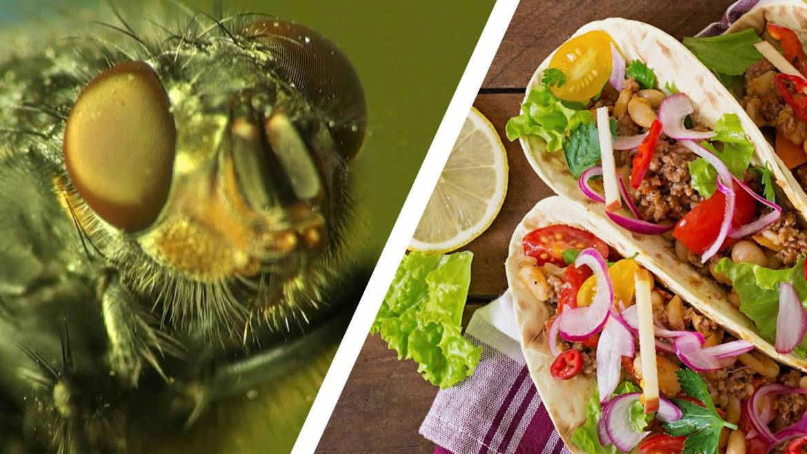 Unsure What Flies Eat And Drink? Keep These Food Sources Away For a Healthier Environment