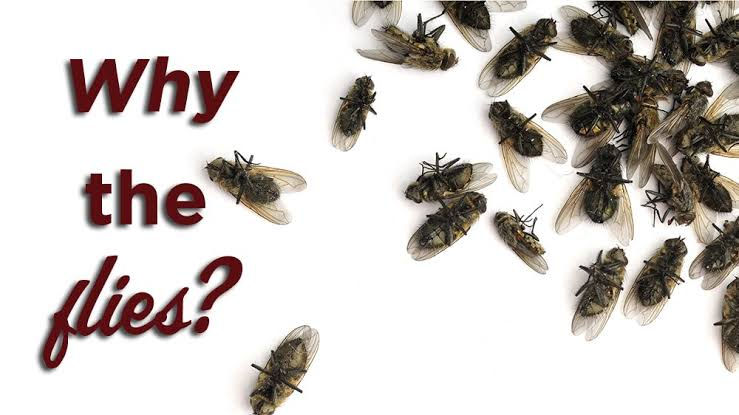 How to Get Rid of and Prevent a Fly Infestation