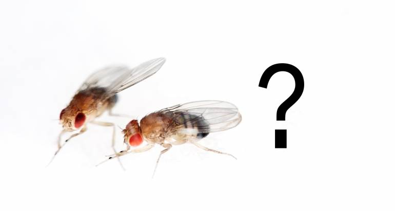 How to Get Rid of Fruit Flies in Australia