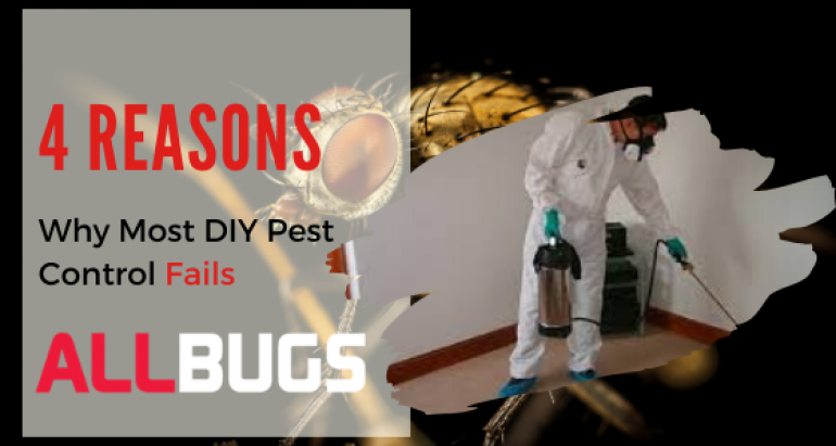 4 Reasons Why Most DIY Pest Control Fails