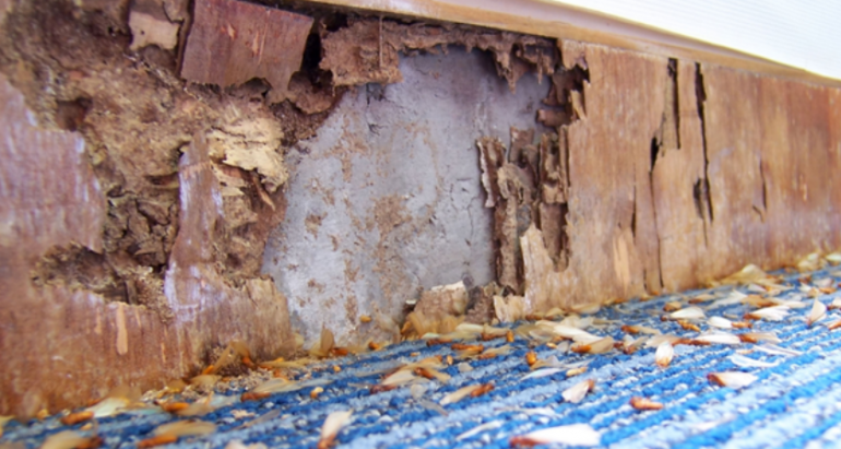 Here's How Often Should You Get a Termite Inspection
