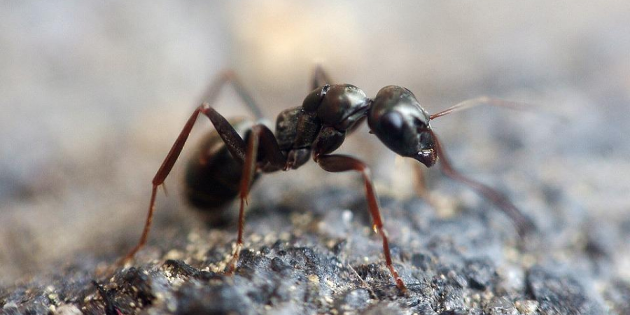 Hot to Easily Spot the Signs of an Ant Infestation
