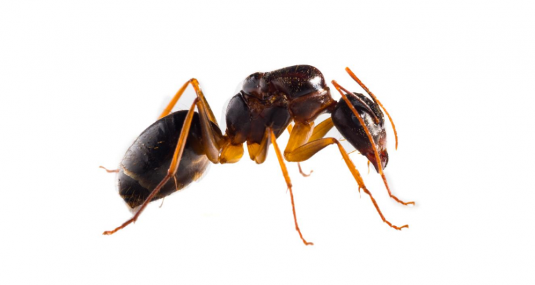 How to Get Rid of Carpenter Ants and Keep Them Out for Good