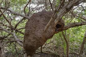 What to Do If You Find a Termite Nest on Nearby Trees