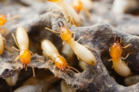 How to Prepare for a Termite Inspection
