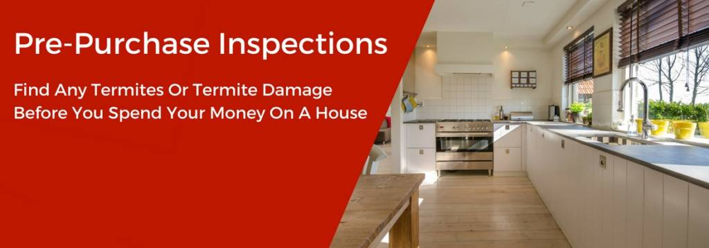 Pre Purchased pest Inspections