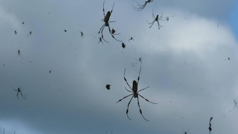 Does Rain Really Attract Venomous Spiders?