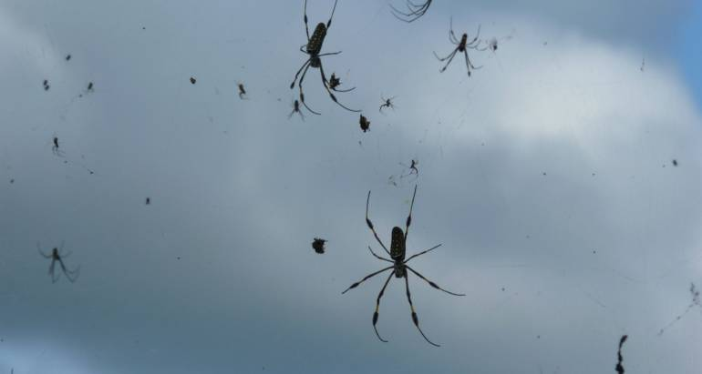Does Rain Really Attract Venomous Spiders?