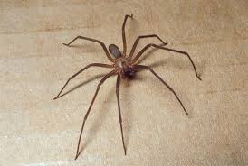 How to Control Spiders in Your Home